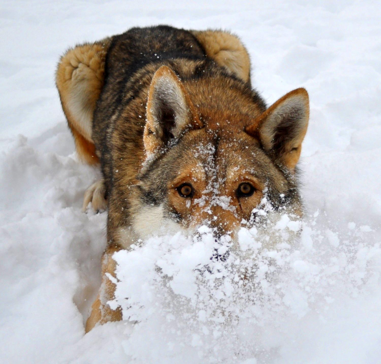 Hundsgemeines Jännertraining