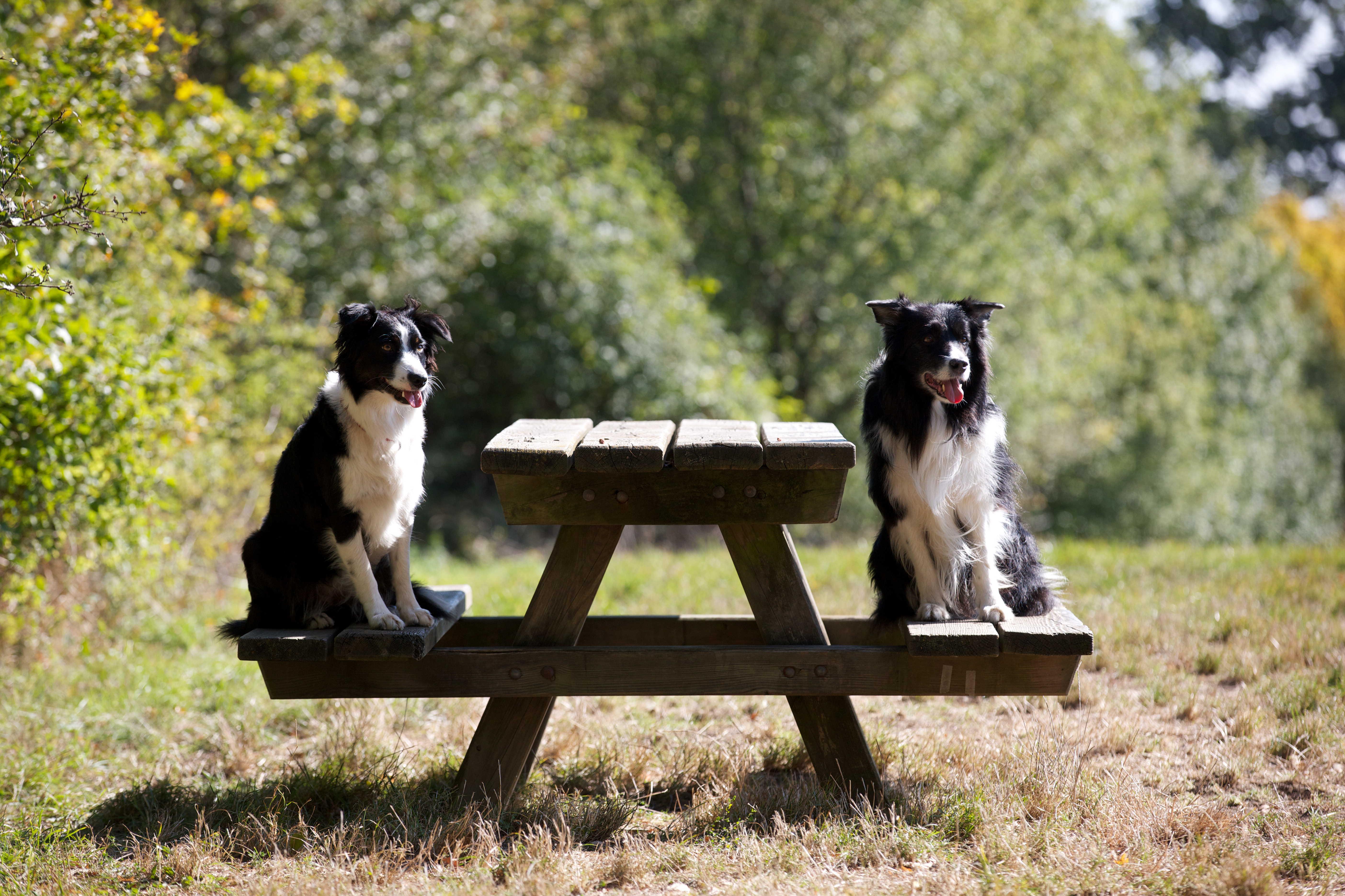 Hundsgemein im Interview