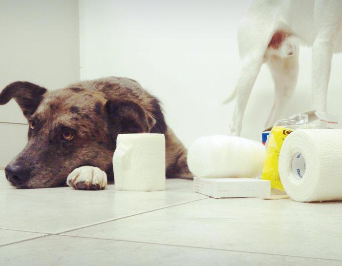 16. April: Erste Hilfe beim Hund