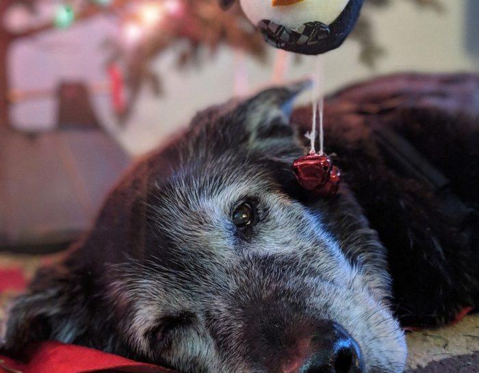Hundsgemeine Winterpause